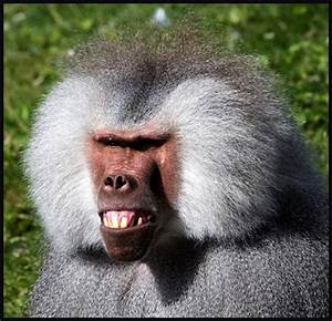 Ugly Overload: Monkey Mockery