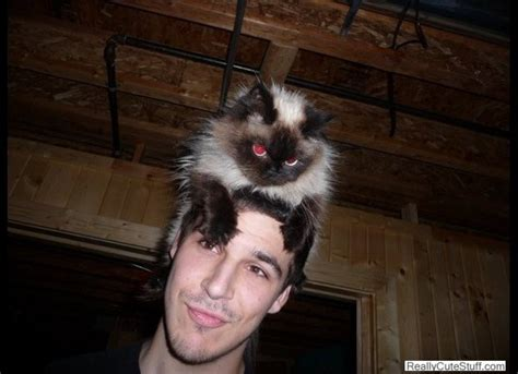 top  funny   cats  hats photo gallery