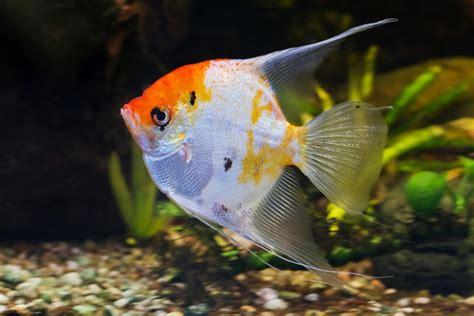aquarium d eau douce poisson