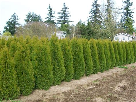 best trees for coverage privacy trees