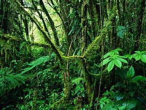 Costa Rica's Tropical Rainforest: Geography 5 Final ...