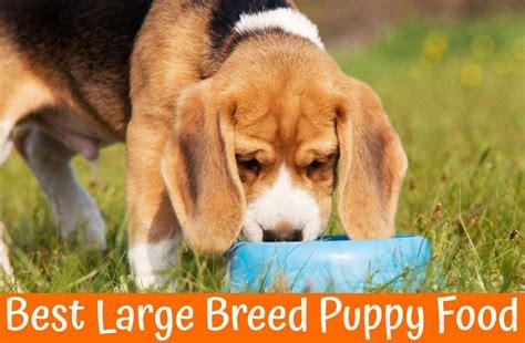 large breed puppy food  reviews    bones