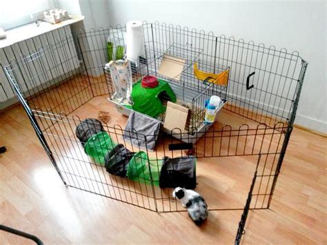 enclos d int 233 rieur lapin nain zooplus 37e chantilly lapin nain