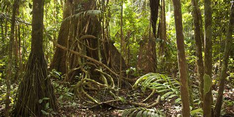 amazon rain forest  drying