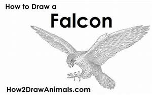 How To Draw A Cartoon Falcon