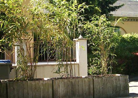 Sechs Immergrüne, Winterharte Kübelpflanzen (auch Für