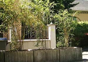 Bambus In Kübeln : bambus sichtschutz winterhart die neueste innovation der ~ Michelbontemps.com Haus und Dekorationen