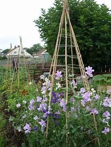1000 images about garden structures on pinterest With katzennetz balkon mit garden sweet pea