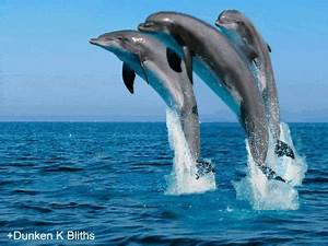 Dolphin GIFs - Find & Share on GIPHY