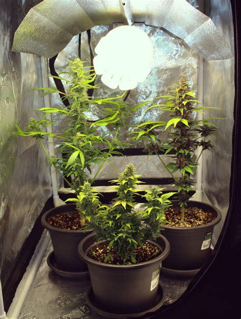 las maravillas del micro cultivo marihuana de calidad en