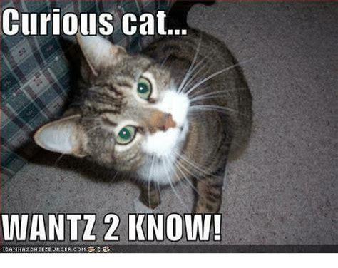 Curious Meme - curious meme 28 images philosoraptor latest memes imgflip curious memes image memes at