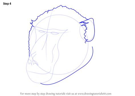 learn   draw  baboon face wild animals step