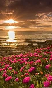 Beautiful, Flower, Scenery, Hd, Wallpapers, For, Desktop, Desktop