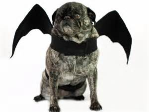 Bat Wing Halloween Costume for Dogs