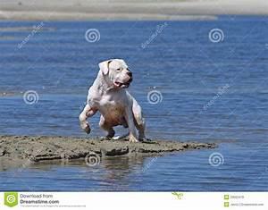 royalty free stock images dog training running send beach image