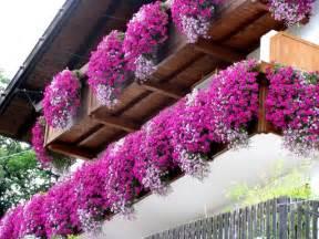 piante da fiore da balcone: piante e fiori da balcone perenni o ... - Piante X Terrazza Pendente