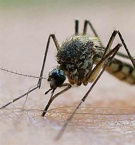 Mückenplage Im Haus : der oberrhein als vorbild s dwest badische zeitung ~ Orissabook.com Haus und Dekorationen