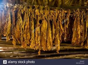 Tabak Auf Rechnung Kaufen : trocknung der tabakbl tter in einer scheune tabak tabak auf dem bauernhof vinales tal vi ales ~ Themetempest.com Abrechnung
