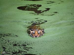 National Geographic Photos: National Geographic - Best ...