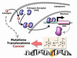Oestrogen Causes Dna Mutations  U2013 Is This How It Fuels Cancer  - Cancer Research Uk