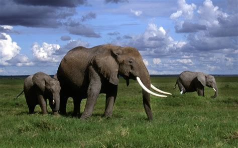 Beautiful Nature Animal Wallpapers - wallpapers elephant wallpapers