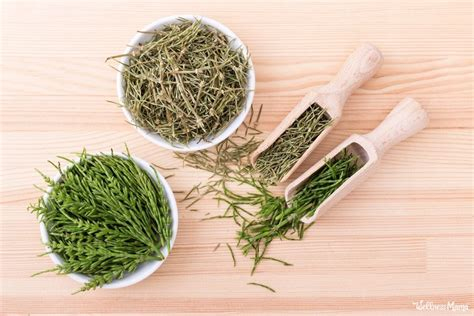 horsetail herb  improved health