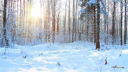 Winter Forest Desktop Wallpapers Computer Cool Naturalist