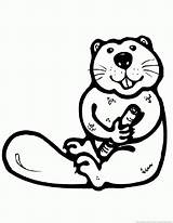 Beaver Animal Print Coloring Pages Zoom sketch template