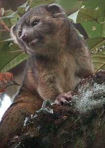 Smithsonian Discovers Cute New Mammal Species