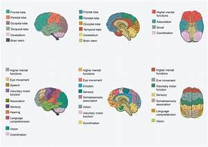 Functions Of Brain Regions