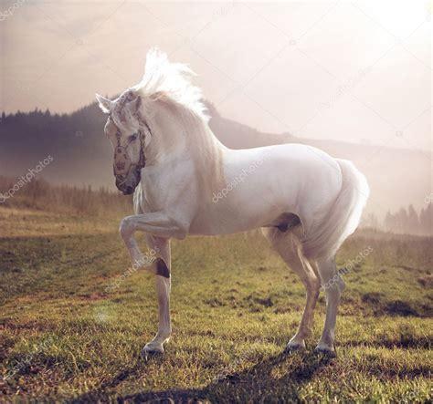 majestic horse depositphotos