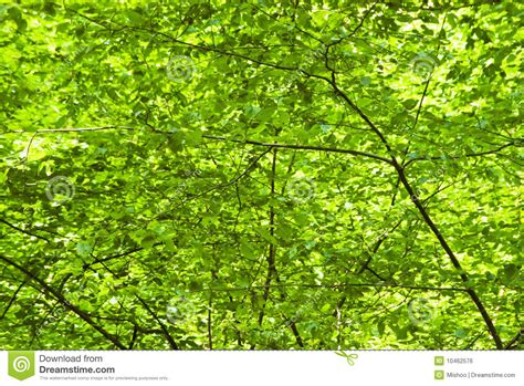 what is foliage green foliage background royalty free stock image image 10462576