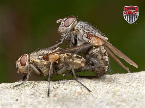 mouche poll 233 nie insecte