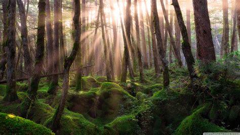 Pine Forest Sunrise 4k Hd Desktop Wallpaper For 4k Ultra