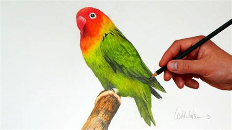 bird colors drawing a bird with simple colored pencils