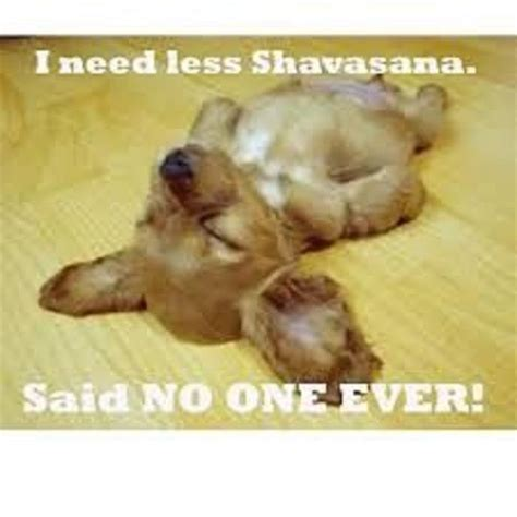 downdog funnies    shavasana downdog diary