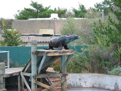 coney island aquarium hours coney island aquarium hours 28 images new york aquarium explore coney island coney island