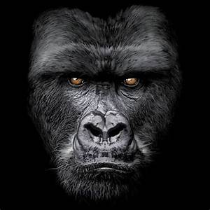 Gorilla Size Chart Majestic Gorilla Face Design On Unisex T Shirt Shirt Color