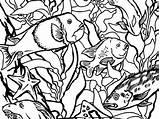 Kelp Montereybayaquarium sketch template