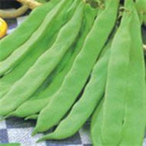 cuisiner les haricots mange tout atelier jardinage hari coco bohno assistante