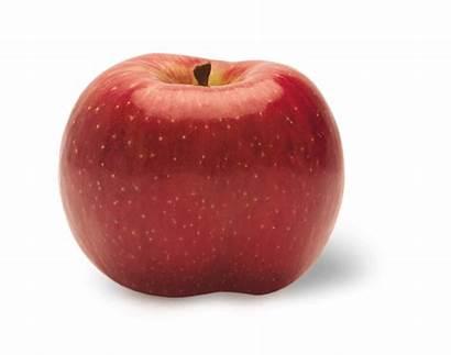 Apple Varieties Sweet Evercrisp Tart York Positive