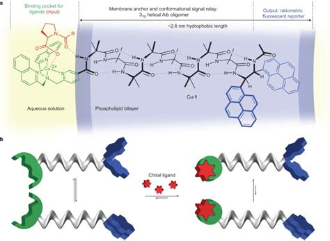 Ligand-modulated conformational switching in a fully ...