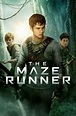 The Maze Runner - Movie Reviews and Movie Ratings | TV Guide