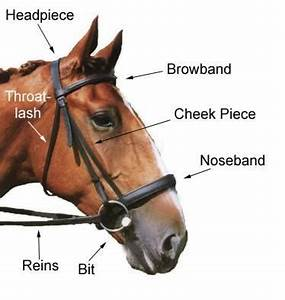 The Snaffle Bridle | Equine to Feline