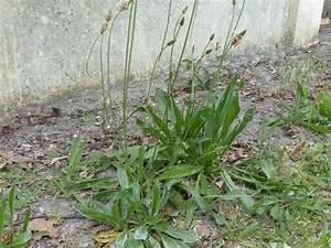 Comment Enlever Les Mauvaises Herbes : mauvaises herbes photos bt22 jornalagora ~ Melissatoandfro.com Idées de Décoration