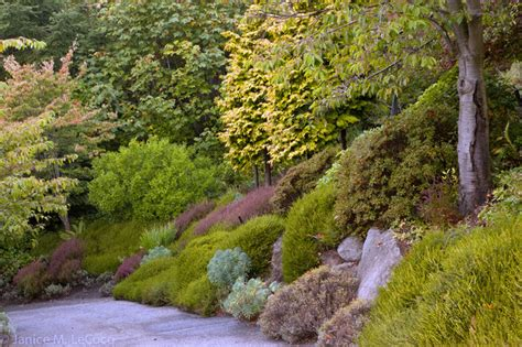 pacific northwest landscape pacific northwest hillside garden traditional landscape other metro by form and foliage