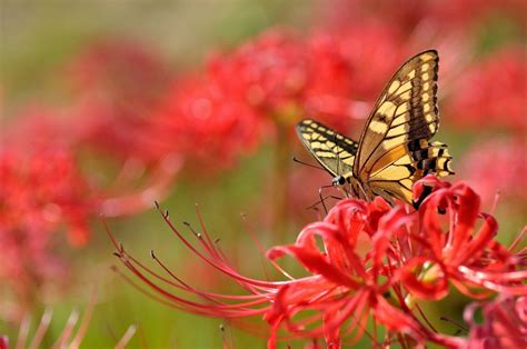 Find the best butterfly and flower wallpaper on wallpapertag. Flowers With Butterfly Wallpapers HD - Wallpaper Cave