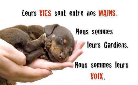 Gayvox, le site de rencontre gay et chat lesbien en France
