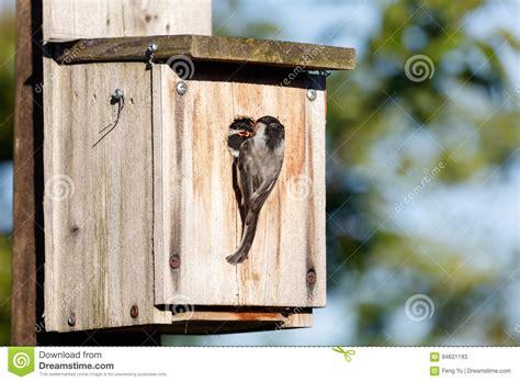 birdhouse  black capped chickadee stock image image  bird canada