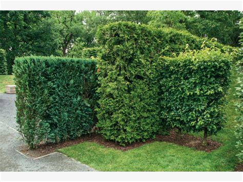 Garten Mit Hecken Gestalten